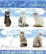 Iranian Domestic cats, Persian Cat History, Persian Cat Breeders, Persian cat names, Persian Cat Gallery