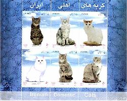 Iranian Domestic cats