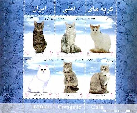 Iranian Domestic Cats, Persian Cats from Iran